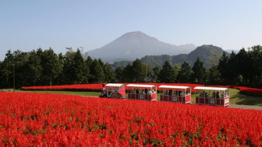 <周辺・景観>日本最大級のフラワーパーク とっとり花回廊