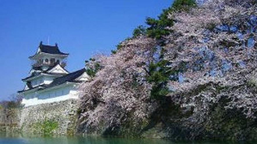 桜と富山城