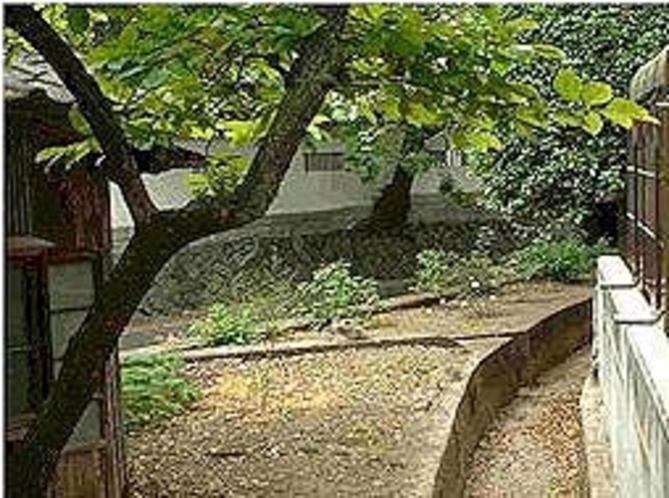 湯村山の森林自然散策道