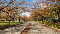 毛馬桜ノ宮公園(秋)