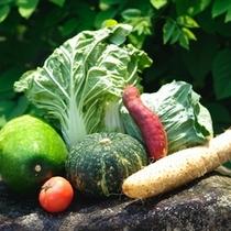 【新鮮野菜】