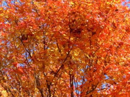 ☆錦秋の八ヶ岳☆ 紅葉と秋の味覚プラン ・・・秋ものがたり・・・