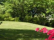 前庭のグリーン