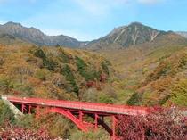 紅葉の八ヶ岳