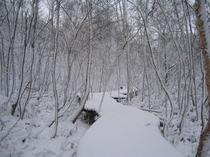 冬のボードウォーク