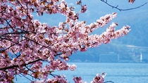 ■天空の自然美-標高625m-■【春】