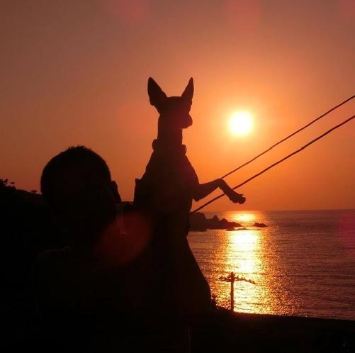 愛犬と夕日