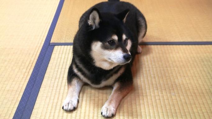 【ペットOK】大切な家族の一員!ワンちゃんと一緒に珠洲旅行♪愛犬と寛ろげるお部屋で安心。。