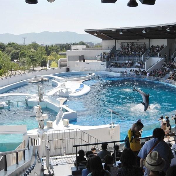 京都水族館イルカ