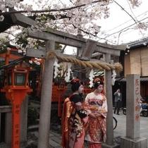 祇園では舞妓さんにも遭遇できるかも!