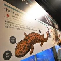 京都水族館おおさんしょううお