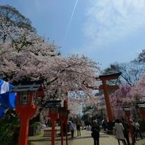平野神社 鳥居と桜
