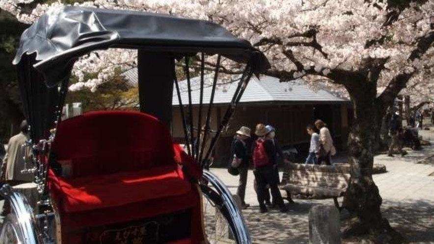 嵐山 人力車と桜<嵐山までホテルから電車で約20分>