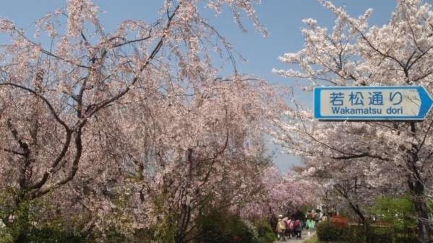 鴨川沿いの桜の小道。