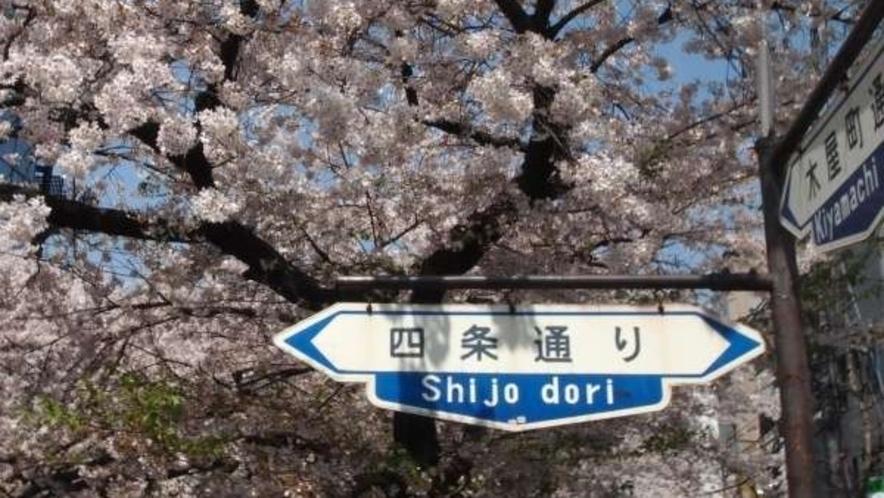 河原町の桜♪<ホテルから河原町まで阪急電車で約5分>