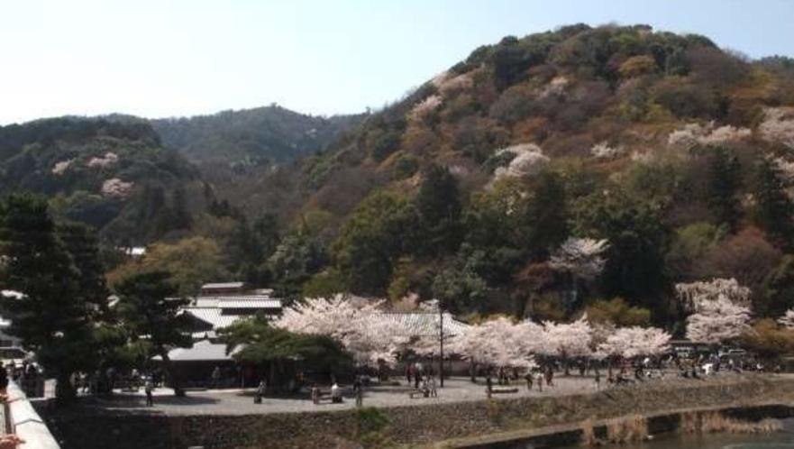 嵐山の春。<ホテルから嵐山まで電車で約20分>