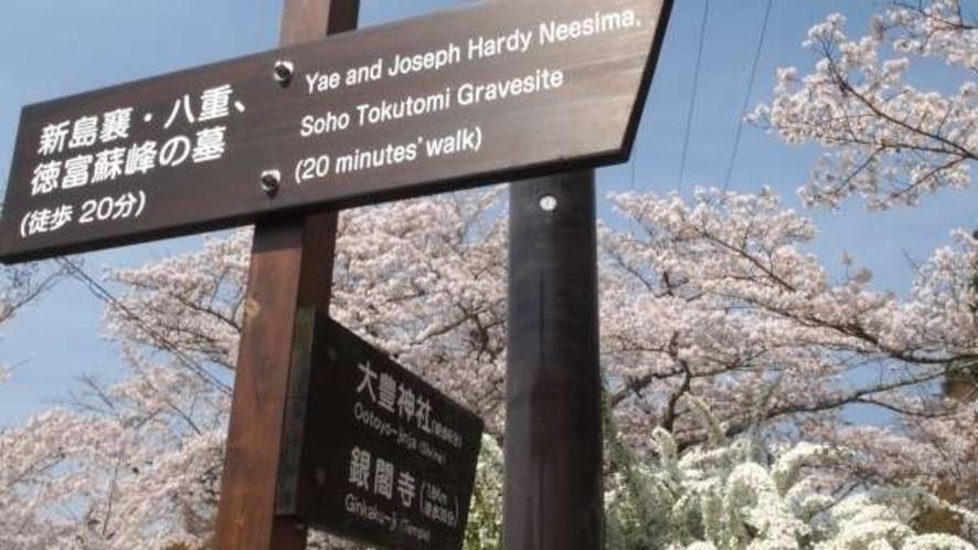 南禅寺⇒永観堂⇒哲学の道へ・・・桜の名所♪