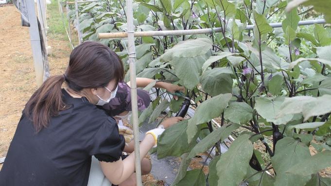 【家族旅行に最適!】野菜の収穫体験付き宿泊プラン(朝食付)