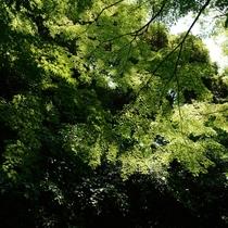 浜松城公園 庭園