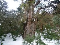 屋久島の冬