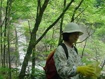 新緑の苗名滝