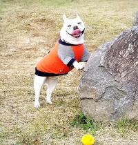 愛犬お散歩①