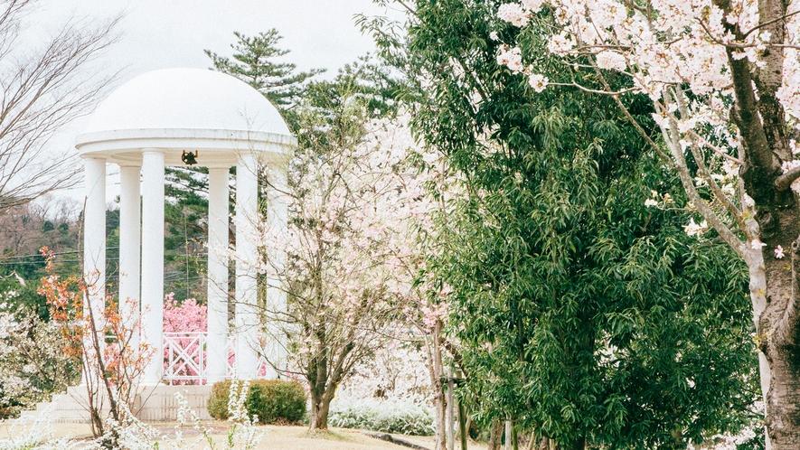 <ガーデン>ガゼボと桜
