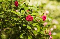 敷地内の花々
