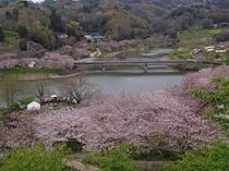 ⑤春爛漫鋸南佐久間ダム桜百景
