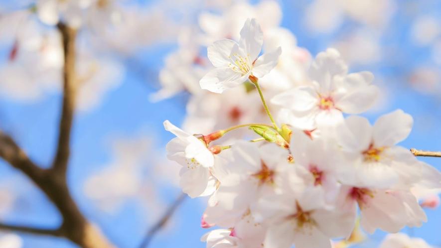 ・【昭和の森】お花見広場(車で約5分)
