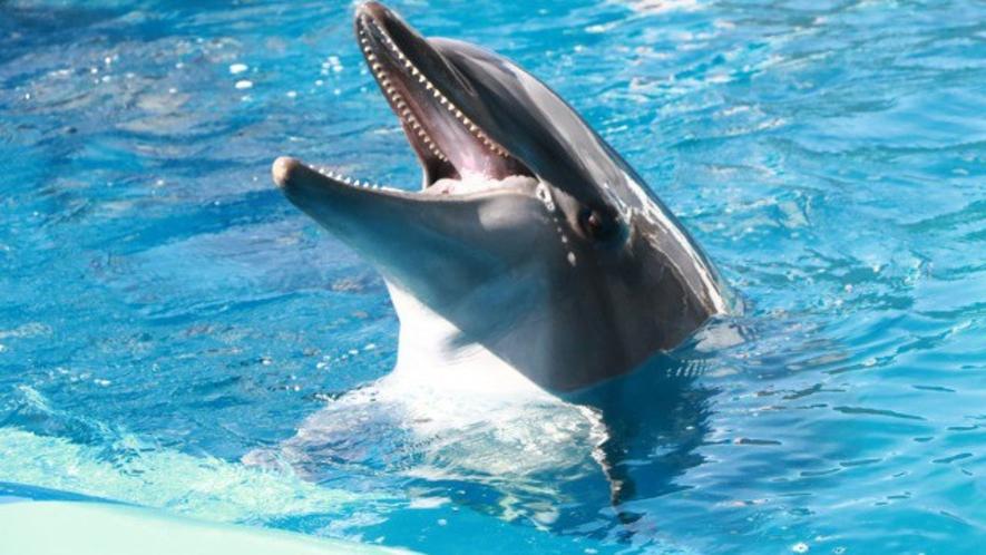 【仙台うみの杜水族館】イルカ