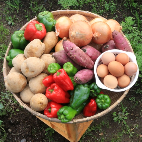 自家農園の野菜は無農薬の有機栽培(*´з`)