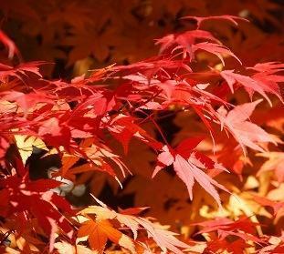 秋 (もみじ)