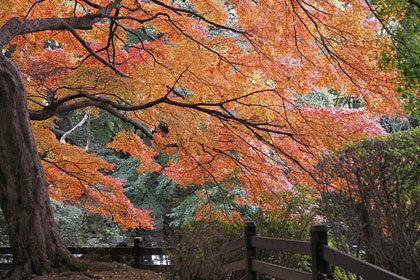 秋 (紅葉)