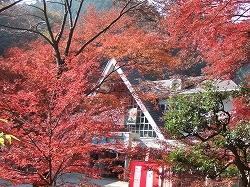 秋 (高尾山もみじまつり)