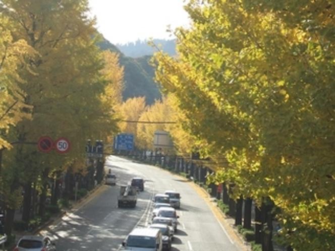 秋 (いちょうまつり)