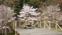 *春には桜が満開になります♪