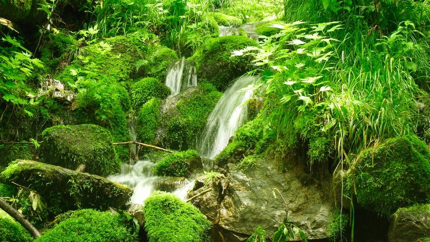 【大自然】美しい自然の中、冷たくて気持ちの良い清水が流れます。 (2)