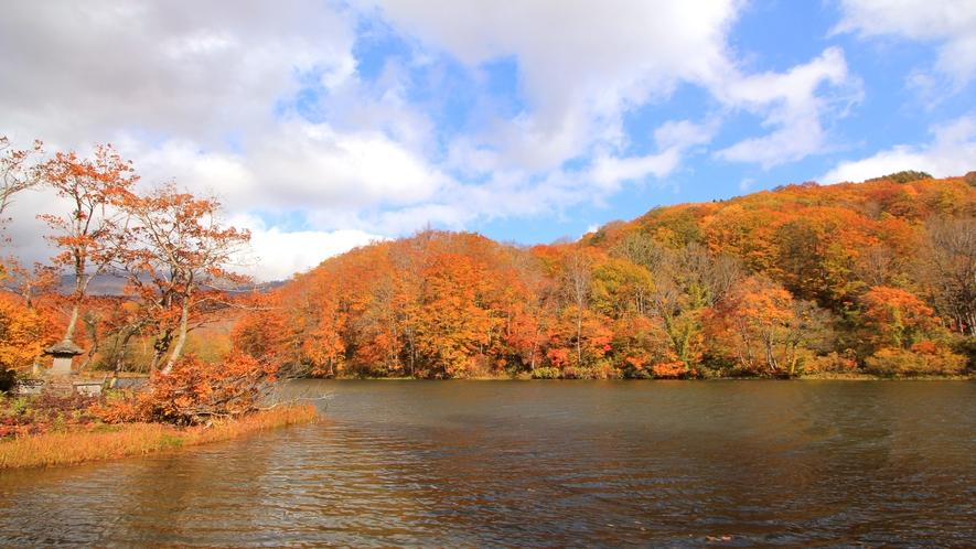 紅葉 金色に輝く木々