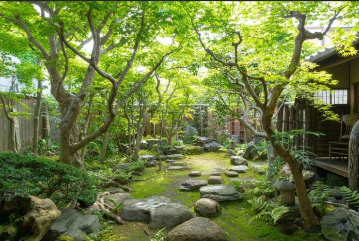 新緑の季節のお庭