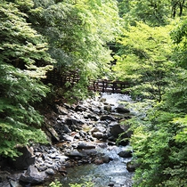 """【かずら橋】徳島の秘境""""祖谷""""にある日本三奇橋のひとつ。当館から車で1時間です。"""