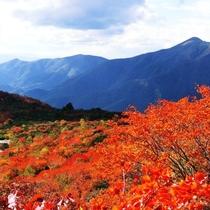姥ケ平の紅葉(大倉山を臨む)