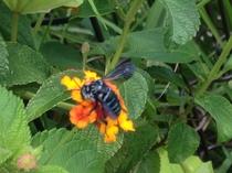 幸せの青い蜂を探そう!