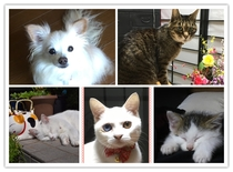 看板猫と看板犬