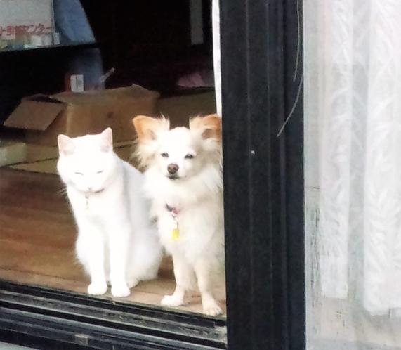 ユキとミュー