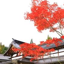 秋の外観3
