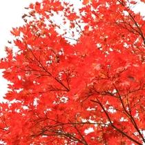 戸隠の紅葉
