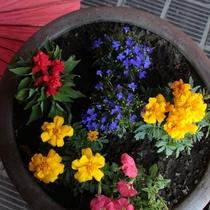 玄関前 鉢植えの花