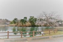 二ツ沼から見る桜
