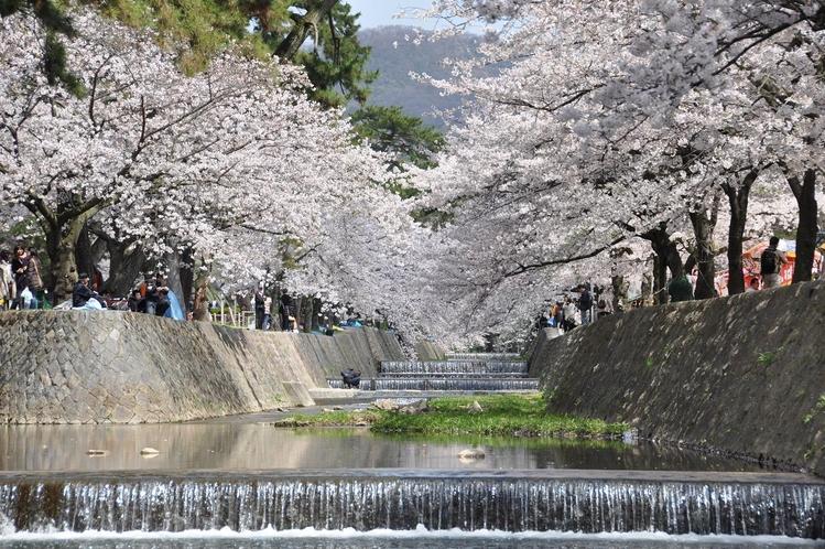 春駅前の桜